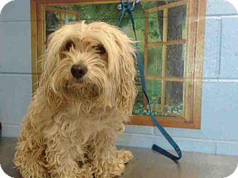 Cocker Spaniel Mix Dog for adoption in San Bernardino, California - URGENT on 10/11 SAN BERNARDINO