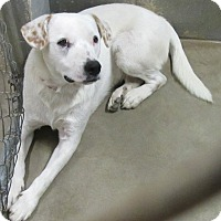 Hound (Unknown Type) Mix Dog for adoption in Glenwood, Minnesota - Aspen