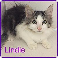 Adopt A Pet :: Lindie - Alvarado, TX
