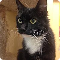 Adopt A Pet :: Sweeite - San Leandro, CA