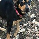 Adopt A Pet :: Lenora