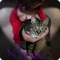 Adopt A Pet :: Xander - San Tan Valley, AZ