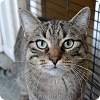 Adopt A Pet :: Sammy - Michigan City, IN