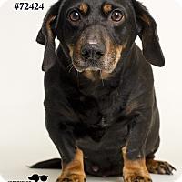 Adopt A Pet :: Adelaide - Baton Rouge, LA