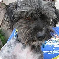 Adopt A Pet :: Sidney - Phoenix, AZ