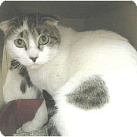 Adopt A Pet :: Snooky - Mesa, AZ