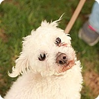 Adopt A Pet :: Wilson - Lancaster, OH
