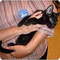 Adopt A Pet :: Jimmy - Colmar, PA