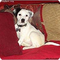 Adopt A Pet :: River - Newcastle, OK