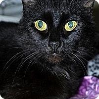 Adopt A Pet :: Eli - Xenia, OH
