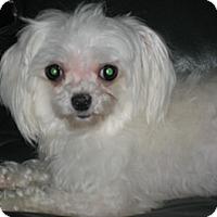 Adopt A Pet :: Nut - Dover, MA
