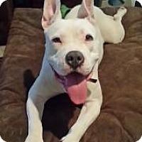 Adopt A Pet :: Luna - Scottsdale, AZ