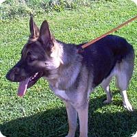 Adopt A Pet :: Missy - Evergreen Park, IL