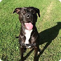 Adopt A Pet :: Charley - San Francisco, CA