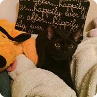 Adopt A Pet :: Blackie - St. Cloud, FL