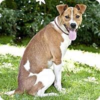 Adopt A Pet :: Ralph - Cashiers, NC