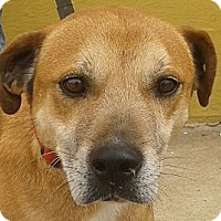 Adopt A Pet :: Tigue - Columbia, TN