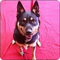 Shepherd (Unknown Type) Mix Dog for adoption in Shreveport, Louisiana - Pearl