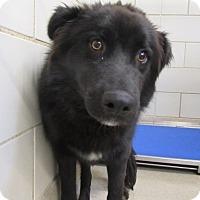 Adopt A Pet :: Zepillin $20 - North Richland Hills, TX
