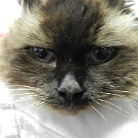 Adopt A Pet :: Gwen - Plainville, MA