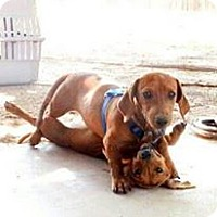 Adopt A Pet :: Bibi and Rue - Aurora, CO