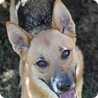 Adopt A Pet :: Ella - Dripping Springs, TX