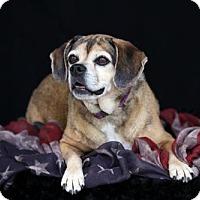 Adopt A Pet :: Koki, 680 - SAN PEDRO, CA