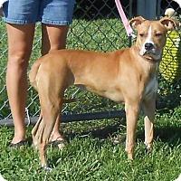 Adopt A Pet :: Allie - Halifax, NC