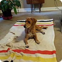 Adopt A Pet :: Cassie - E. Greenwhich, RI
