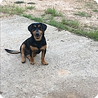 Adopt A Pet :: Sam - Groton, MA