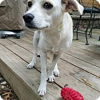 Adopt A Pet :: Uma - Smithtown, NY