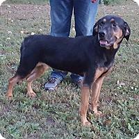 Adopt A Pet :: Josie - Somonauk, IL