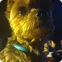 Adopt A Pet :: Maximillian - Suwanee, GA