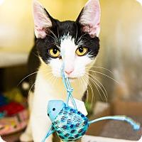 Adopt A Pet :: Bradley - Seville, OH