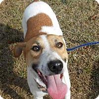 Adopt A Pet :: Tara - Allentown, NJ