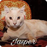 Adopt A Pet :: Jasper - Livonia, MI