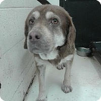 Adopt A Pet :: Casper - Fayetteville, WV