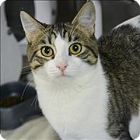 Adopt A Pet :: Spunky - Vallejo, CA