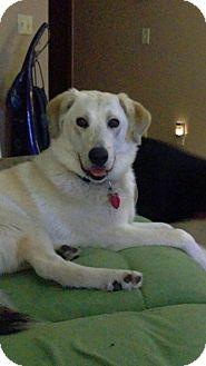 German Shepherd Dog Mix Dog for adoption in Maple Grove, Minnesota - Gladys
