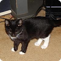 Adopt A Pet :: Prancer (5415) - Tampa, FL