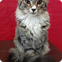 Adopt A Pet :: Charlie - Roanoke, VA