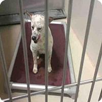 Adopt A Pet :: A1043034 - Bakersfield, CA