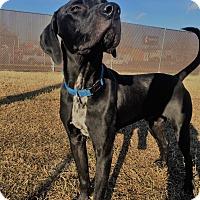 Adopt A Pet :: Geo - Richmond, VA