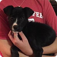Adopt A Pet :: Delilah - Brunswick, ME