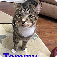 Adopt A Pet :: Tommy - Floral City, FL
