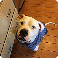 Adopt A Pet :: Skip - Foster needed - Centreville, VA