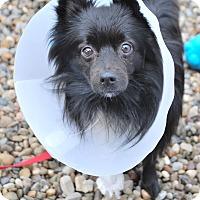 Adopt A Pet :: Harland - Berea, OH