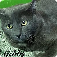 Adopt A Pet :: Gibbs - Chisholm, MN