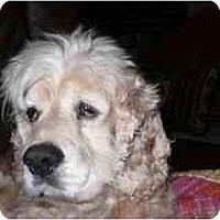 Adopt A Pet :: Pete - Tacoma, WA