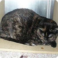 Adopt A Pet :: Bridget - Colmar, PA